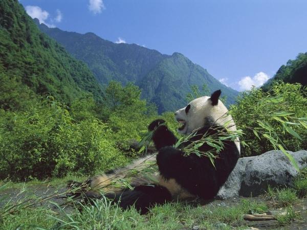 blog_panda