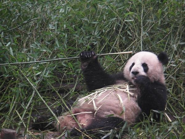blog_chine_20160402_08h12m07_panda