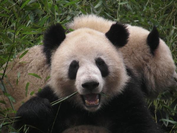 blog_chine_20160402_08h53m27_panda