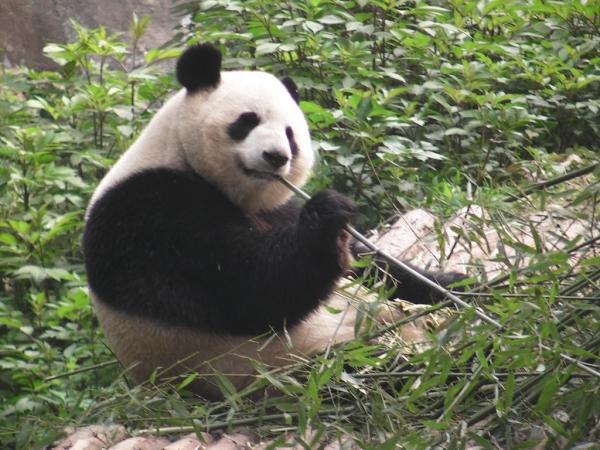 blog_chine_20160402_10h24m34_panda