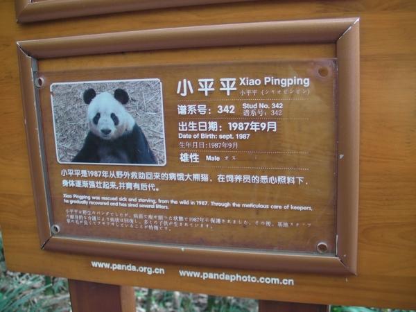 blog_chine_20160402_10h54m33_panda