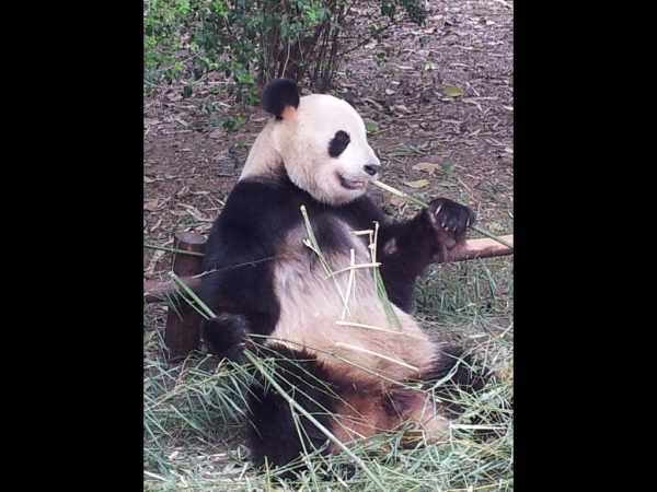 blog_chine_20160402_16h12m54_panda